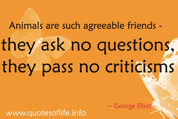 Animals-are-such-agreeable-friends-they-ask-no-questions-they-pass-no-criticisms-Mary-Anne-Evans-George-Eliot-animal-picture-quote1